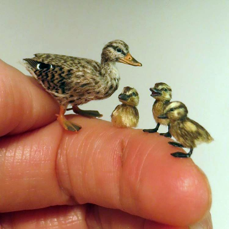 A miniature mother duck and three ducklings, all only as large as the last two knuckles of Fanni's finger.